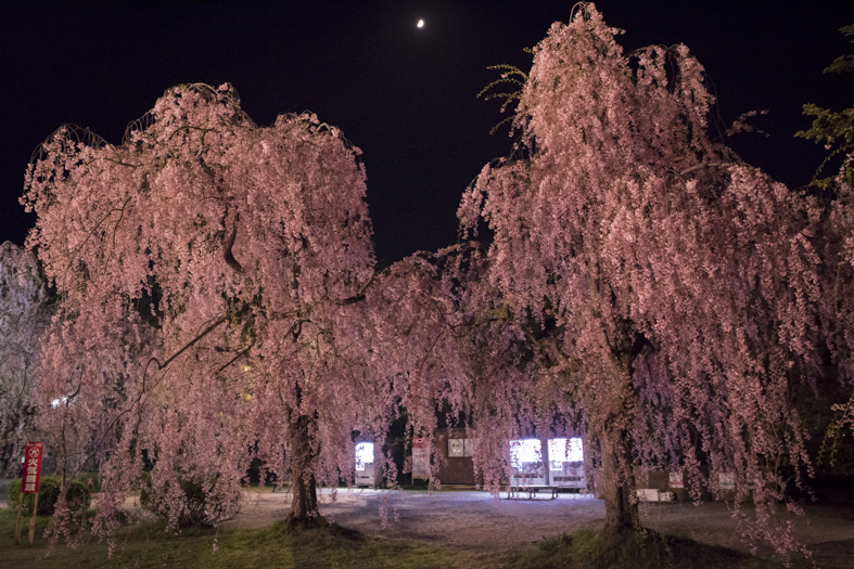 Weeping Cherries and Vending Machines