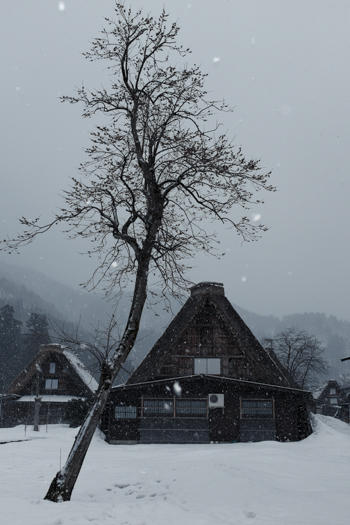 Shirakawago Tree - Farm House   George Nobechi