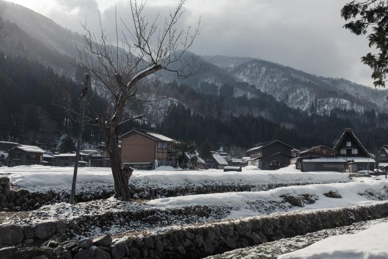 Cherry Tree - Shirakawago Winter