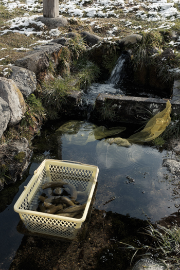 Japanese Pickles Being Washed - Shirakawago   George Nobechi