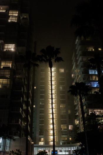 Palm Tree, Del Rey, CA
