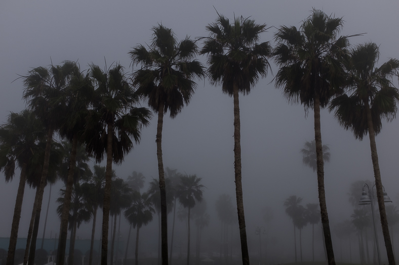 Palm Trees and Lampposts in Fog, Venice CA