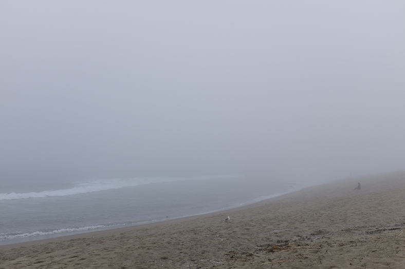 Seagull and Woman in Fog, Venice CA